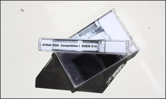 stray dog large